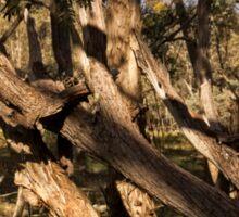 Aranda Bushland Nature Reserve (7) Sticker
