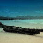 Driftwood - Marion Bay Tasmania by Nigel Butfield