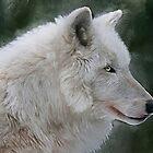 White Wolf by ellenspaintings