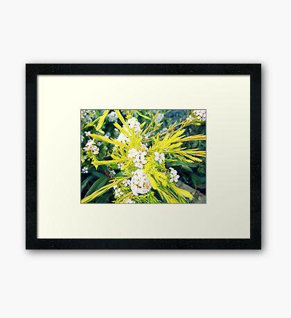 Flowering Blossoms Framed Print