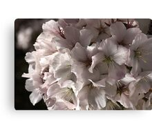 Softly Blossoms Canvas Print