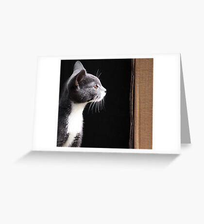 Miss M.  Greeting Card