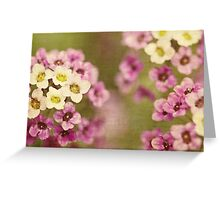 Spring colours Greeting Card