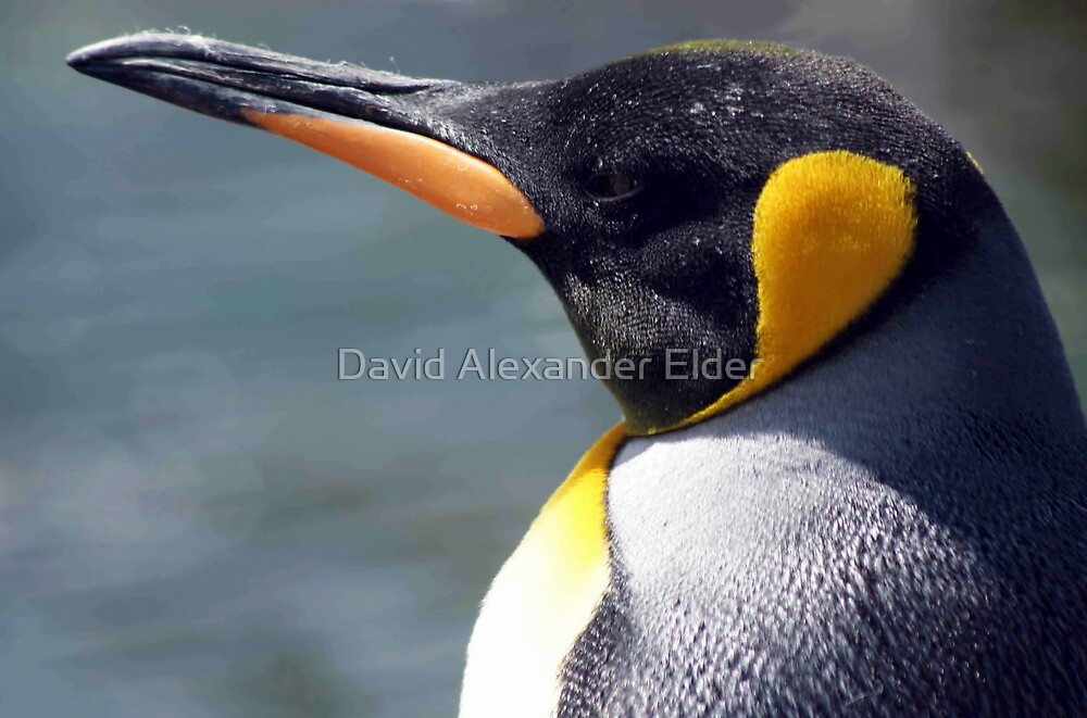 Emperor Penguin by David Alexander Elder