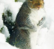 Grey Squirrel in the Snow by David Alexander Elder