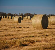 Hay Bales! by Anna Ryan