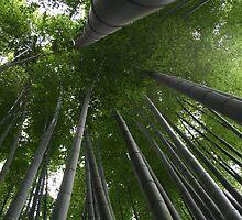 Bamboo Forest in Kamakura, Japan by Atanas Bozhikov Nasko