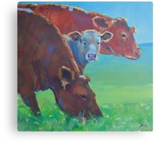 Two and a Half Cows Canvas Print