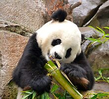 Panda and Bamboo by Ellen Rosen Singer