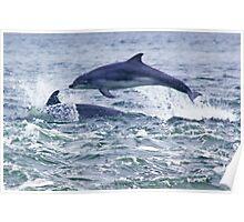Bottlenose Dolphin Flying Poster
