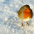 Robin in the Snow by David Alexander Elder