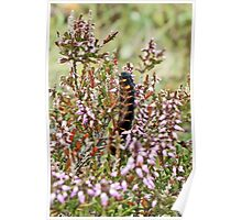 Caterpillar in the Heather Poster