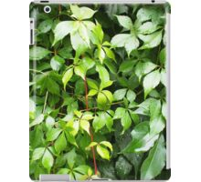 Green leaves with water droplets iPad Case/Skin