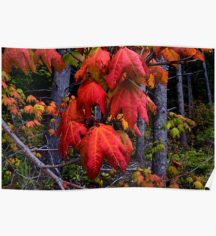 The Party Is Over ~ Vine Maple Leaves ~ Poster