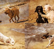 Dogs Running Wild by reflector