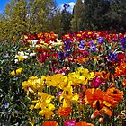 Spring Colour, Hobart Style by Brett Rogers