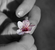 Spring at your fingertips by Deborah Clearwater
