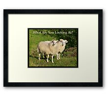 Nature Series/Humor/What Are You Looking At? Framed Print