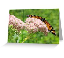 The Beauty Of A Monarch Greeting Card