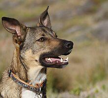Dude the Indigenous dog by galemc