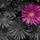 Purpleleeny... by Lorin Richter