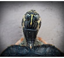 ET-urtle by Juantolin