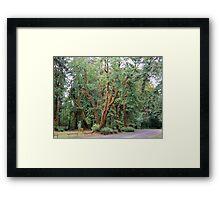 Schafer State Park, Washington Framed Print