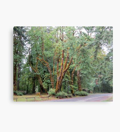 Schafer State Park, Washington Metal Print
