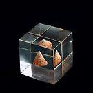 Shell in Plastic by Glenn Cecero