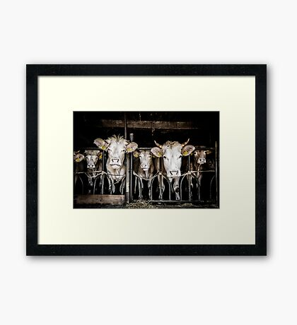 Cows! Framed Print
