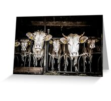 Cows! Greeting Card