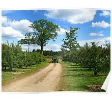 A Country Road among an Apple Orchard. Poster
