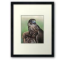 Saker's Falcon Framed Print