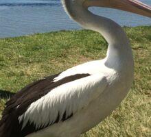 Pelican Glaring Sticker