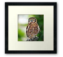 eurasian eagle owl Framed Print