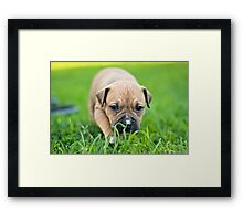 Going on a Bear Hunt Framed Print