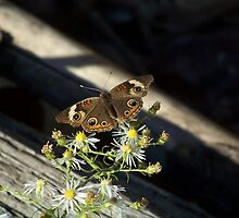 Butterfly and Wildflowers by James Brotherton