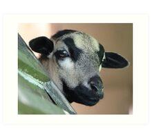 Curious Cameroon Sheep Art Print