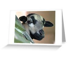 Curious Cameroon Sheep Greeting Card