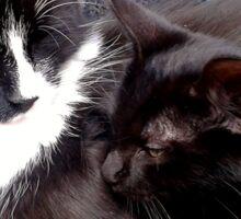 Snuggling Kittens Sticker