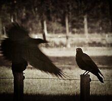 Two Crows by JelmervNuss