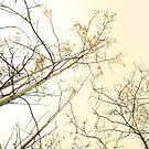 forest tapestry by Priska Wettstein