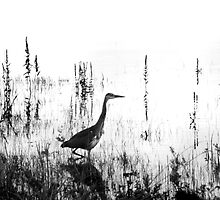 Lonely Heron on Lake Carrowmore, County Mayo by Dave  Kennedy