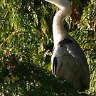 Heron in the trees by Esther  Moliné