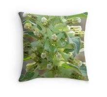 Milkweed - Hierba de Zizotes Throw Pillow