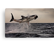 Air Jaws Canvas Print