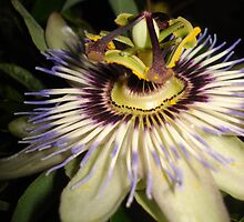 Passion Flower by RedFlavourArt