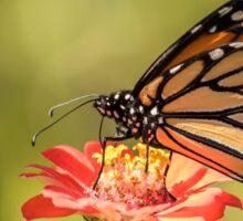Monarch On Zinnia 9-2015 Sticker