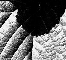 Leaf Nearfield by James2001