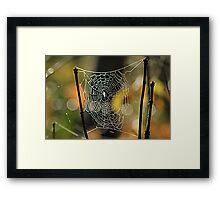 Spider's Creation Framed Print